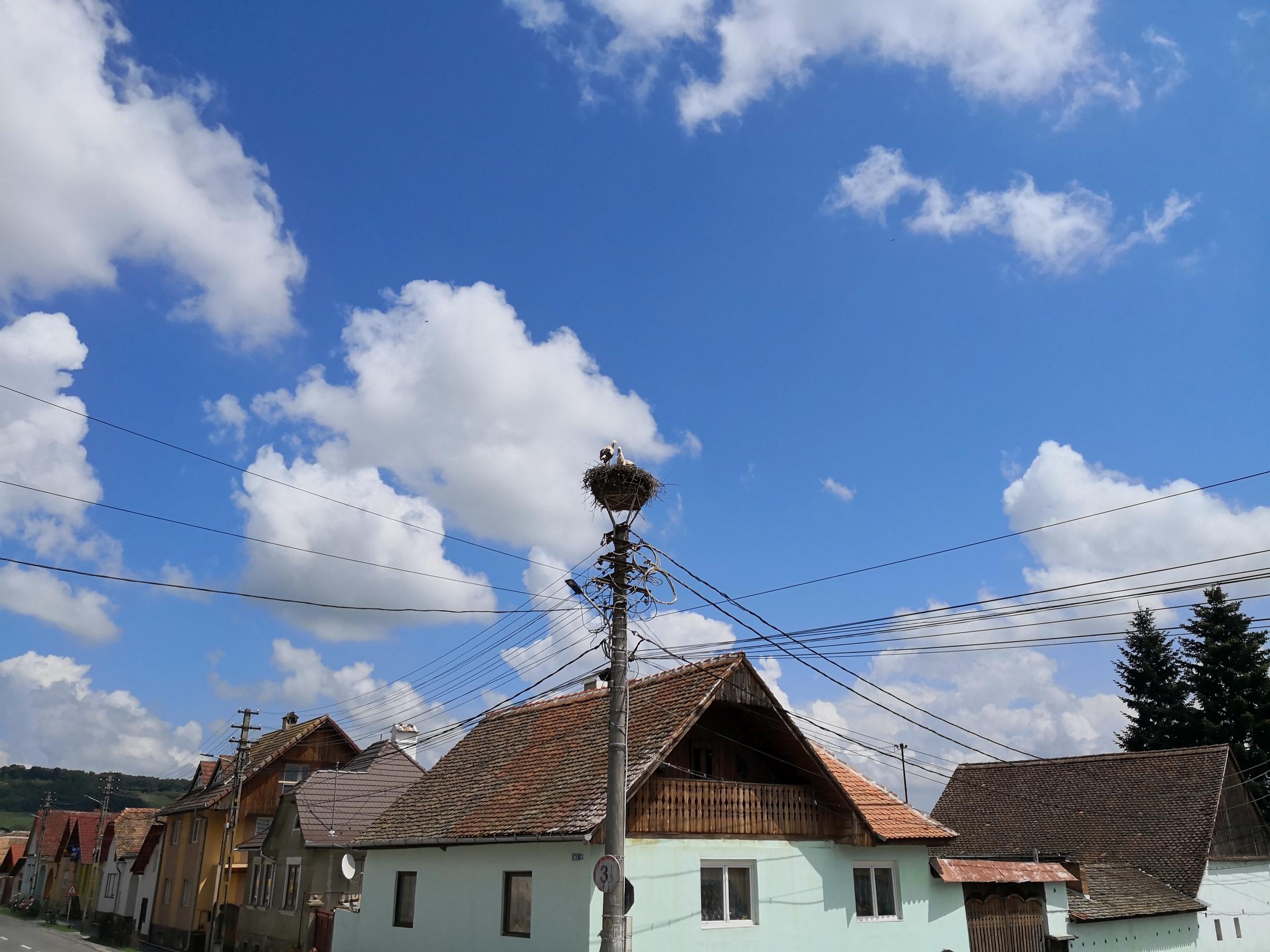 Störche Rumänien