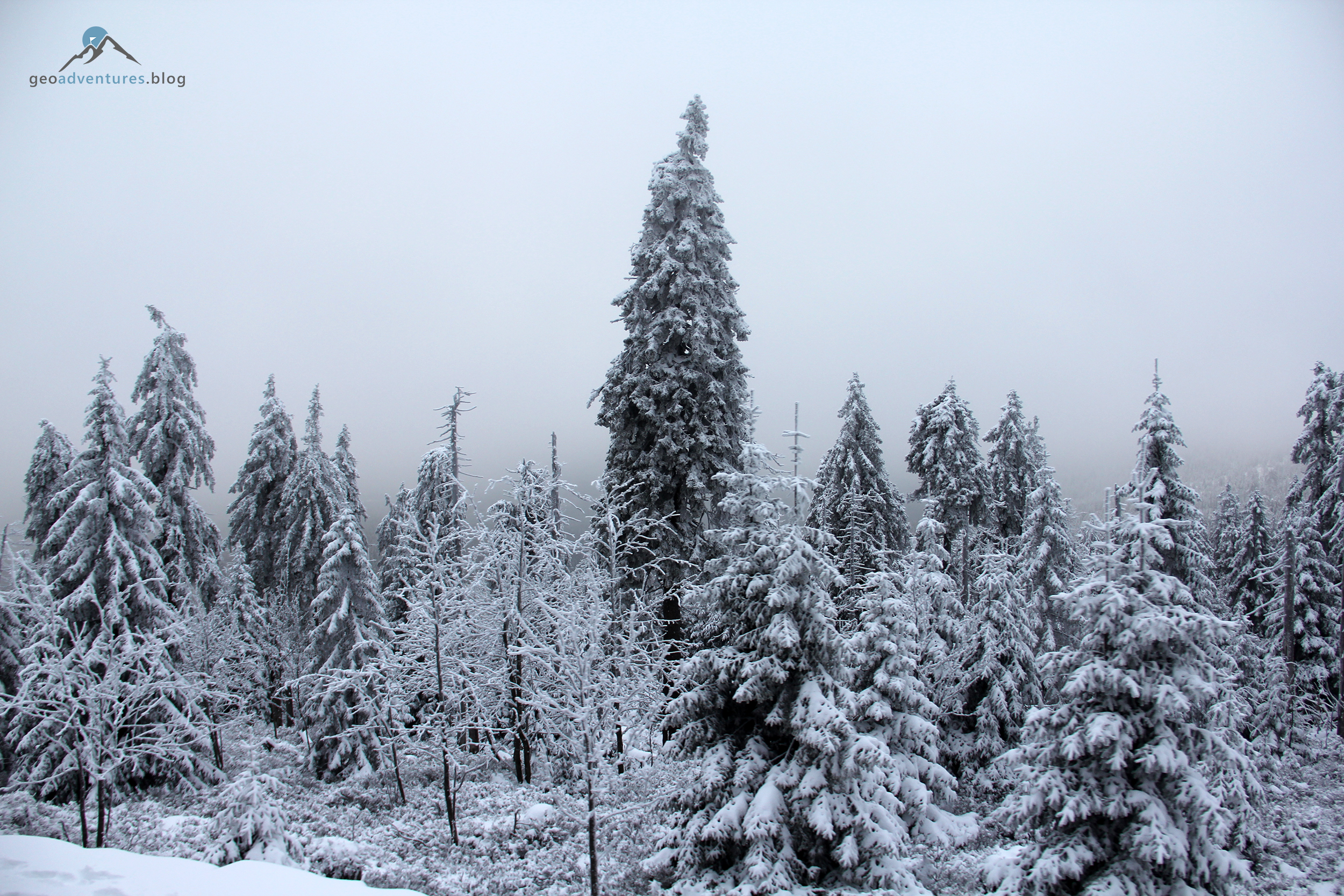 Schneebedeckter Harzer Fichtenwald