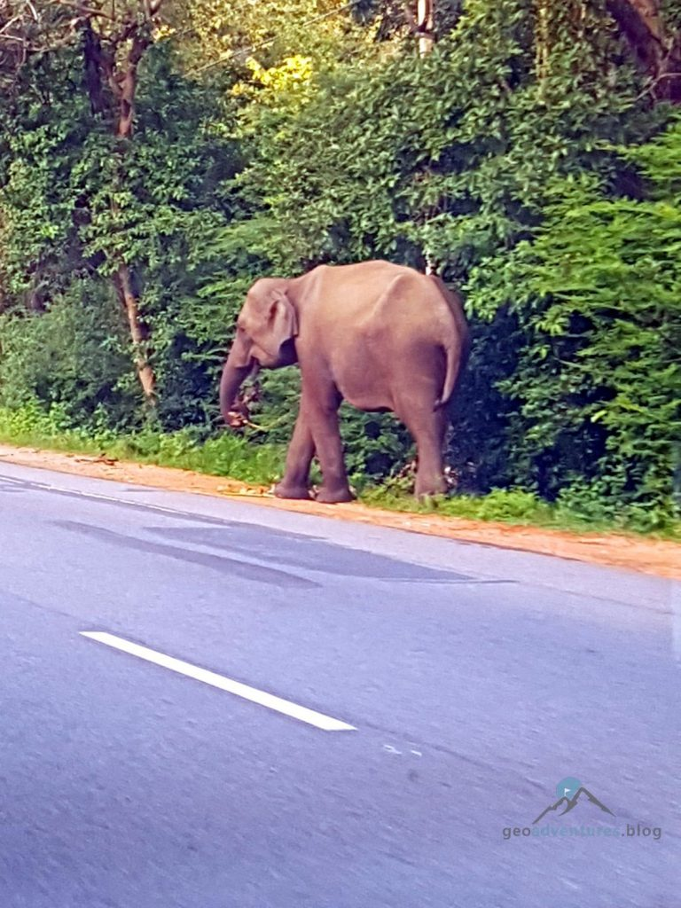 Geocaching Sri Lanka Elefant
