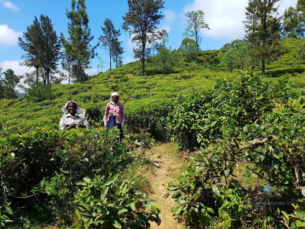 Geocaching Sri Lanka Tee