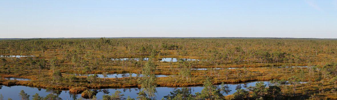 Geocaching in Lettland: der erste Weihnachtsbaum in Riga, eine weite Moorlandschaft und ein interessanter Lost Place